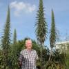 Эхиум: удивительный сорняк