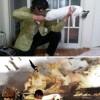 Работы корейских фотошоп-троллей