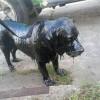 Спасение пса, облитого мазутом