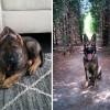 Вчерашние щенки, ставшие взрослыми собаками