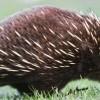 10 самых страшных животных современности, которые шокируют вас своим видом!