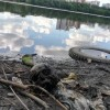 В Екатеринбурге в Городском пруде найден человеческий череп