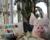 Канадская пара приютила в своем доме милого «мини-поросенка»… сегодня он весит 300 кг