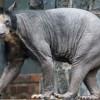 15+ животных, которых сложно узнать без шерсти и перьев