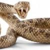Почему змея называется гремучей