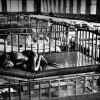 Лучшие снимки, получившие Пулитцеровскую премию за новостную фотографию