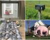 35 снимков от тех, кому повезло с соседями. С такими не соскучишься!