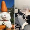 Когда коты хотят отдохнуть, им ничто не может помешать — даже это!