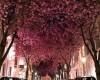 10 самых красивых в мире тоннелей из деревьев