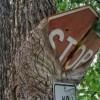 16 деревьев-силачей, которые доказали, что с природой точно не стоит шутить
