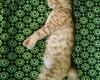 10 вариантов поз: как ваша кошка пытается с вами поговорить