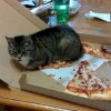 Эти 15 фотографий доказывают, что коты — самые настоящие вестники хаоса