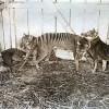 10 видов животных, которых истребил человек