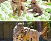 Тогда и сейчас: 14 фотографий друзей-животных, которые выросли вместе