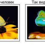 Интересные факты: Куры видят больше цветов, чем мы