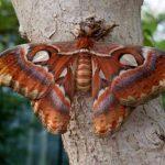 Самые уникальные и красивые бабочки