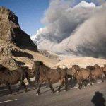 Могут ли животные предвидеть стихийные бедствия?