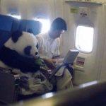 10 самых курьезных ситуаций в самолете