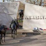 Британский холокост животных: перед войной усыпили более 750 тыс питомцев
