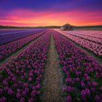 25 причин посетить Нидерланды. Фотограф Альберт Дрос