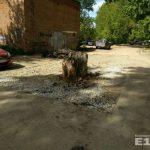 В Екатеринбурге старый пень посреди дороги закатали в асфальт
