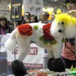 Китайцы губят домашних животных ядовитой краской, чтобы они выглядели уникальными
