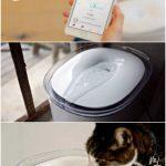 10 крутых гаджетов для вашего кота, которые его непременно порадуют!