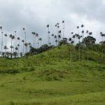 Кокора – долина уникальных пальм. Ты такого еще не видел!