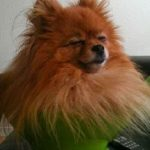 23 фотографии невозмутимых собак, которые захотели и присели