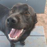Бывшая бездомная собака стала помогать другой бездомной собаке