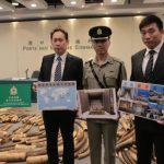 В Гонконге остановили партию слоновой кости стоимостью 9,2 млн долларов