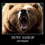 Пьяный медведю ‒ друг, товарищ и брат?