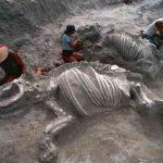 Что погубило Мадагаскарских ящеров