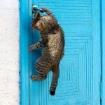 20 забавных котов, которые отчаянно хотят попасть в дом