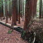 10 деревьев, не желающих умирать и доказывающих силу природы