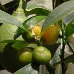Неожиданное полезное свойство авокадо