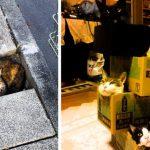 21+ забавных фото кошек, которые могут влезть куда угодно!