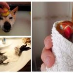 20 умилительных домашних животных, которые обожают принимать ванну