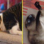 18 обдолбанных кошачьей мятой котиков, которые словили свой кайф