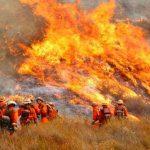 В Калифорнии ввели чрезвычайную ситуацию из-за крупного пожара