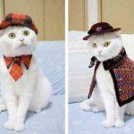 Коты возглавили борьбу со взяточничеством в строительной отрасли