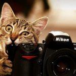 Как научиться фотографировать: пошаговая инструкция от Nikon