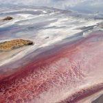 Убивать животных и превращать их в статуи: природный феномен озера Натрон