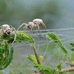 Почему пауки пожирают своих матерей?