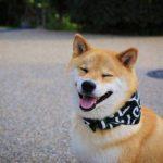 17 забавных историй о собаках, которые растрогают, и рассмешат одновременно