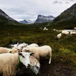 Путешествие по Норвегии. Незабываемое зрелище