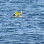 Что скрывают морские пучины? 5 находок, которые удивили общественность