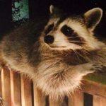 25 животных, которые пришли поздороваться и растопили ваше сердце