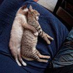 25 кошачьих поз для сна, которые приводят в восторг