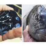 14+ невероятных чудовищ, которых удалось поймать моряку из Мурманска